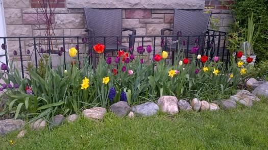 Matt's garden